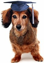 image: dog with mortarboard