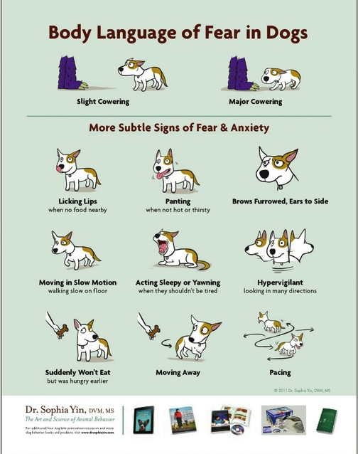 Dog Body Language - Illustrating Fear in Dogs